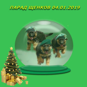 Парад щенков (выводка молодняка) 03.01.2019 г.